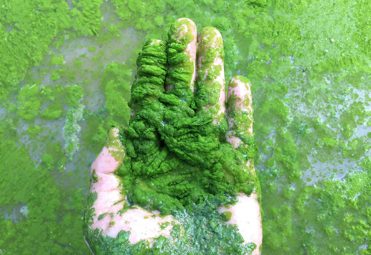 Algae Bloom Pesticide Water
