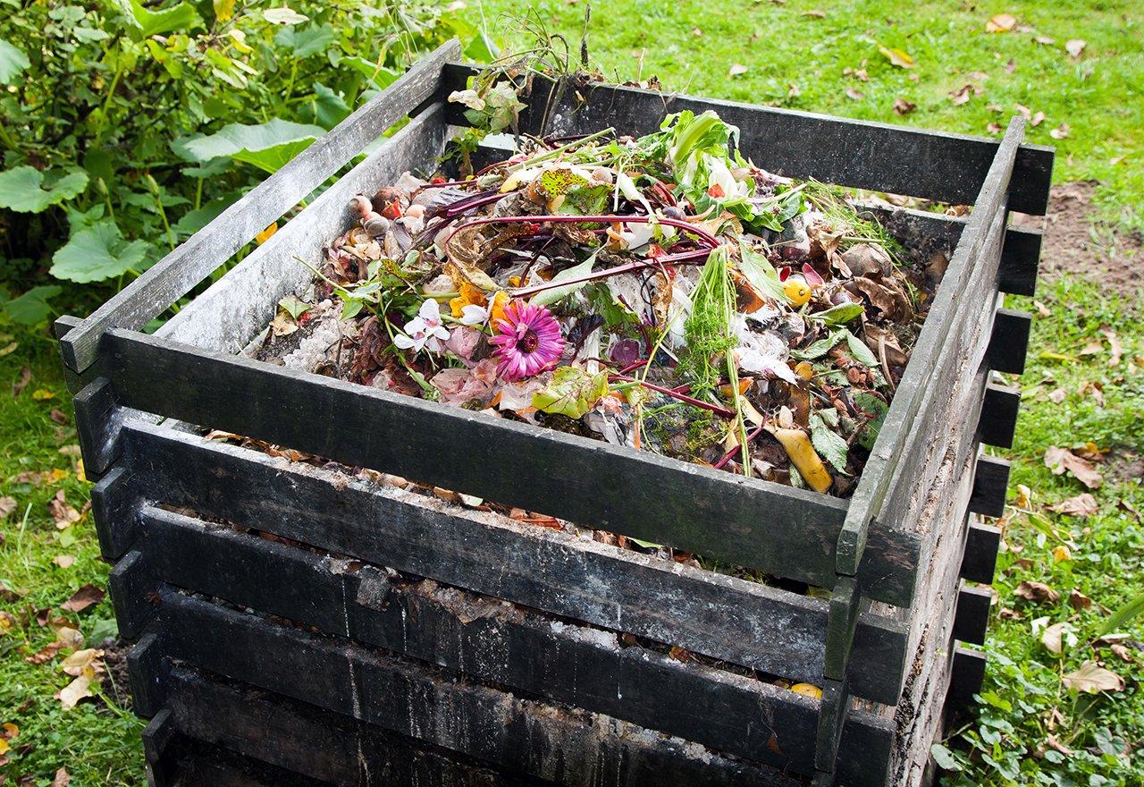 Compost Bin Garden