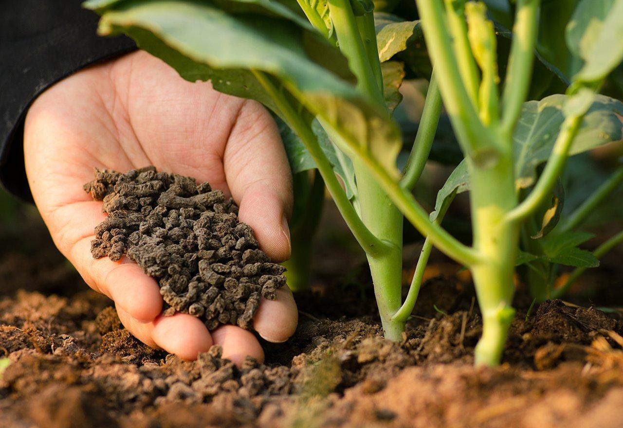 Compost Topdressing Organic.jpg