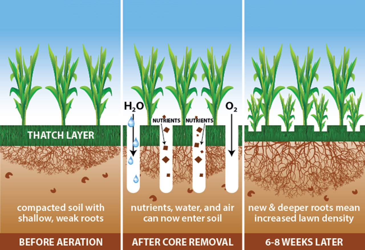 Core Aeration Illustration