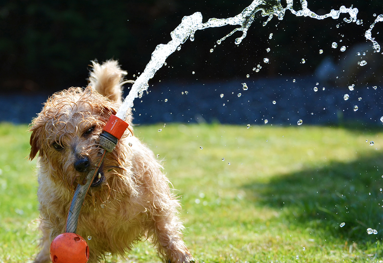 Dog Small Sprinkler