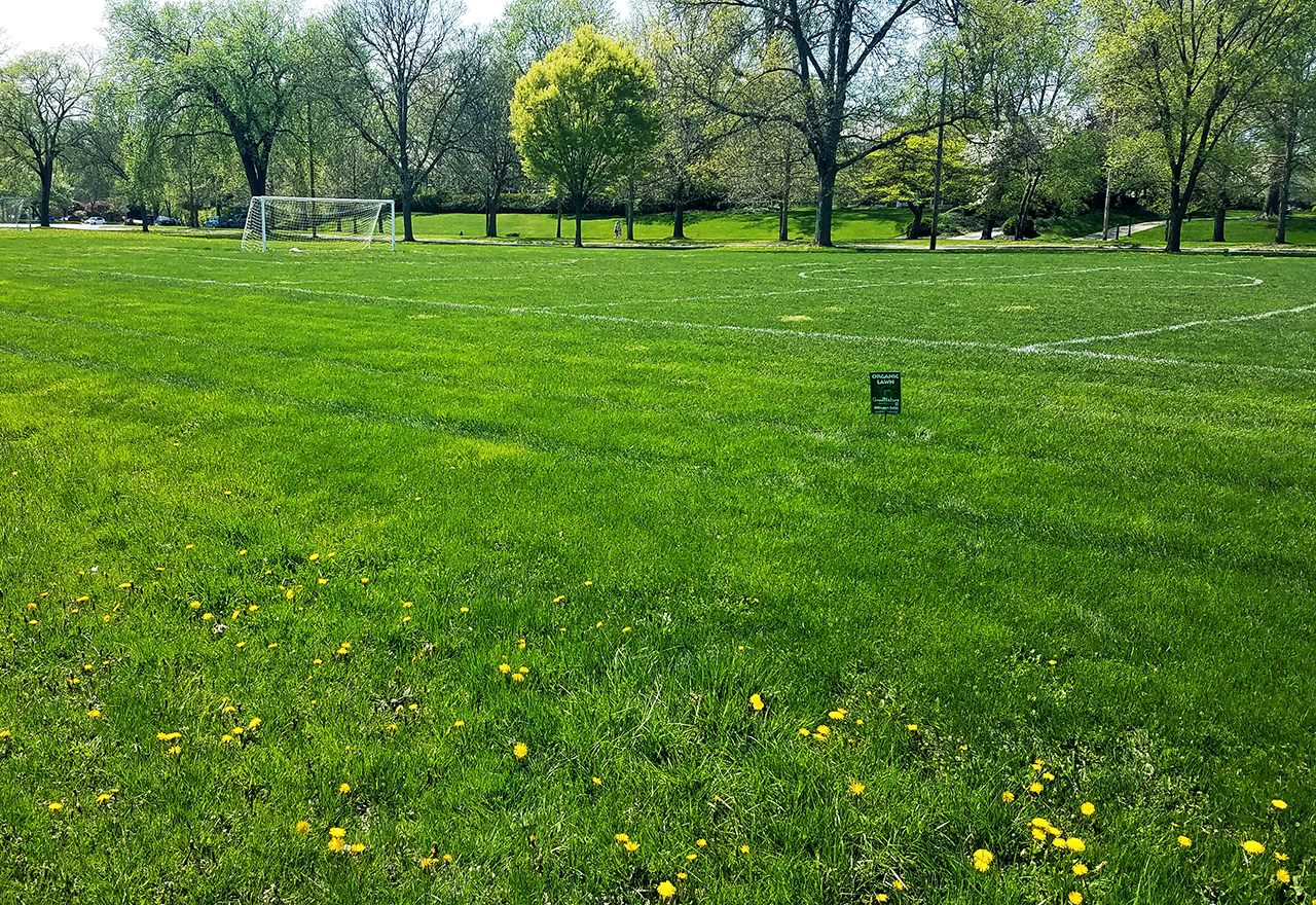 Field Athletic Microclover
