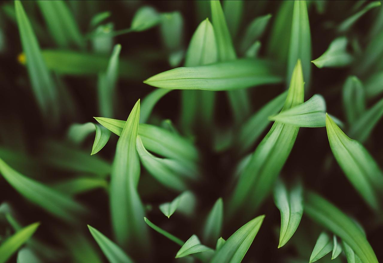 Grass Detail Overhead