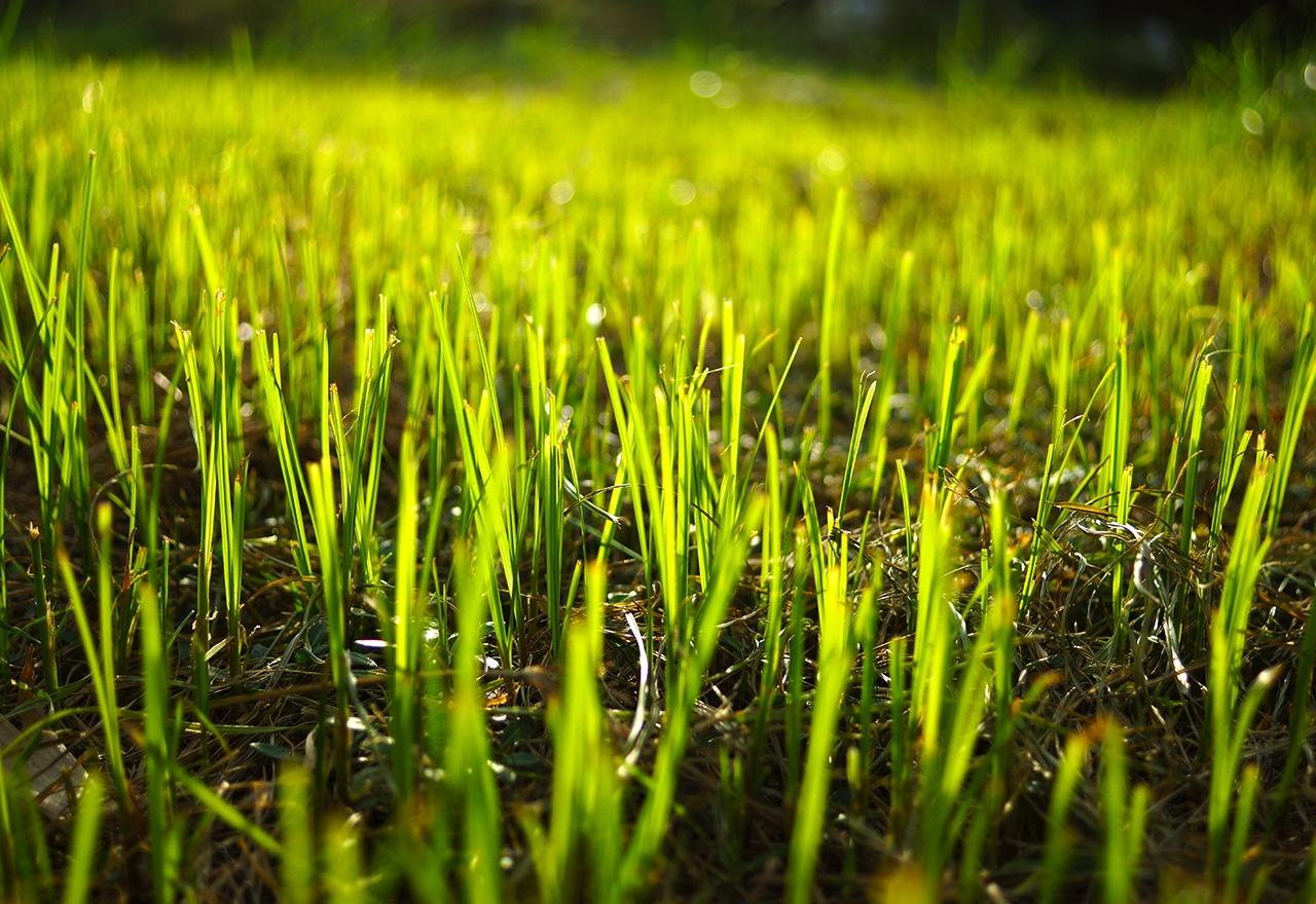 Grass Growth.jpg