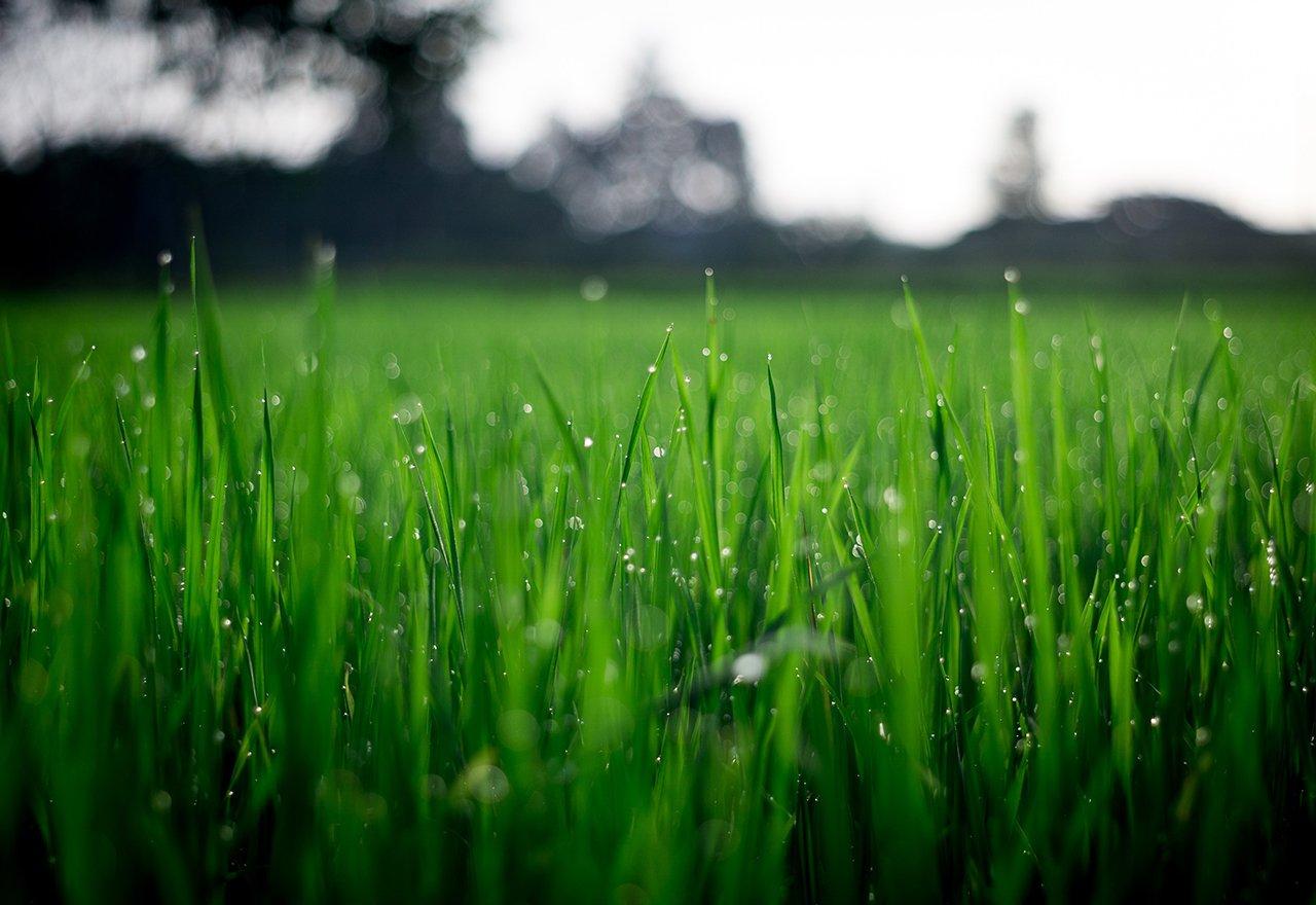 Grass Rain Blades Close
