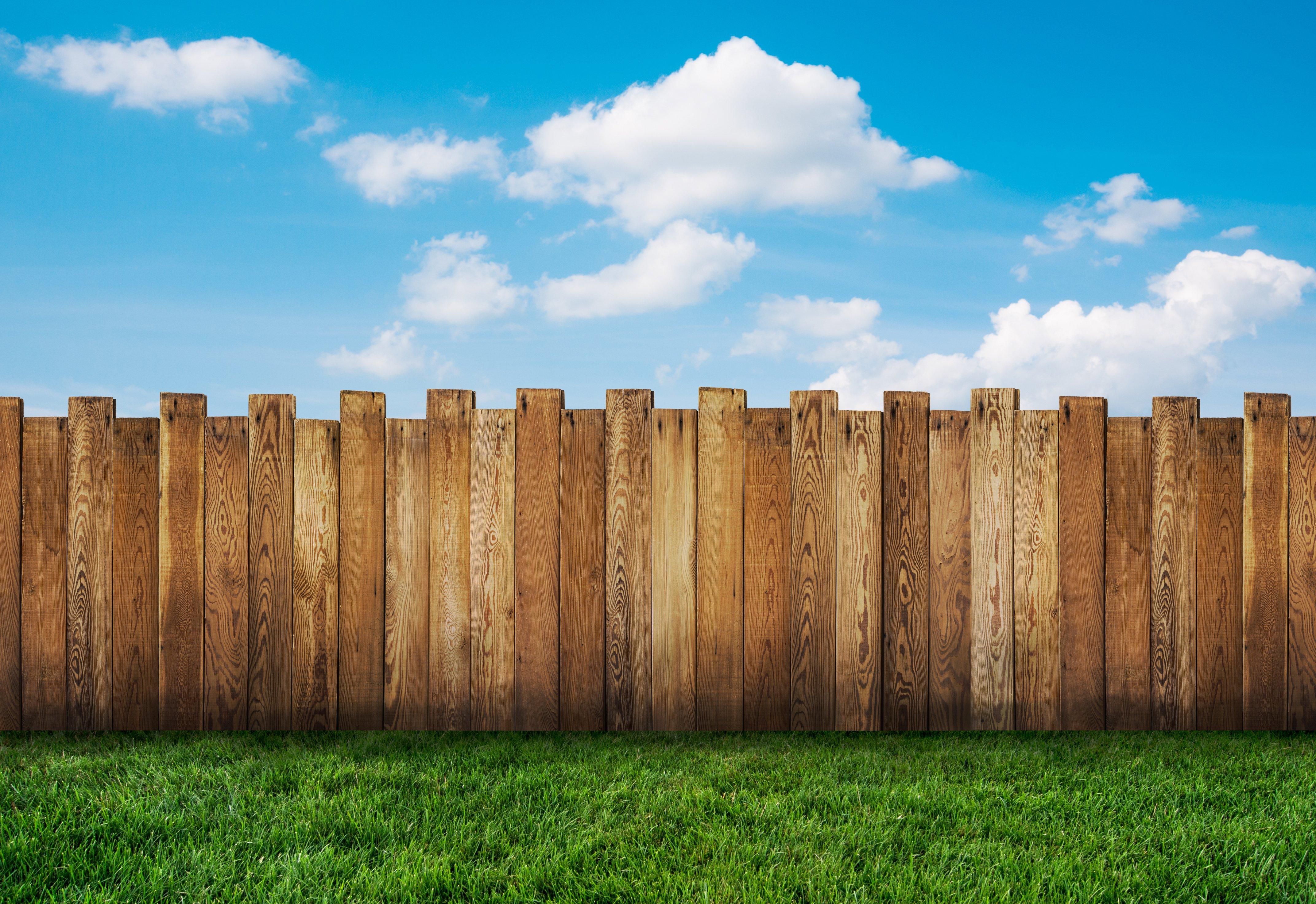 Green Grass Fence Neighbor