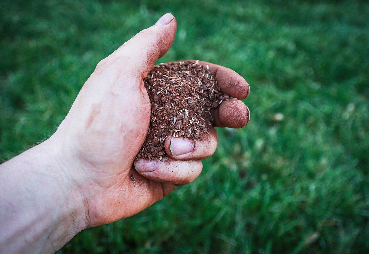 Hand Grass Seed