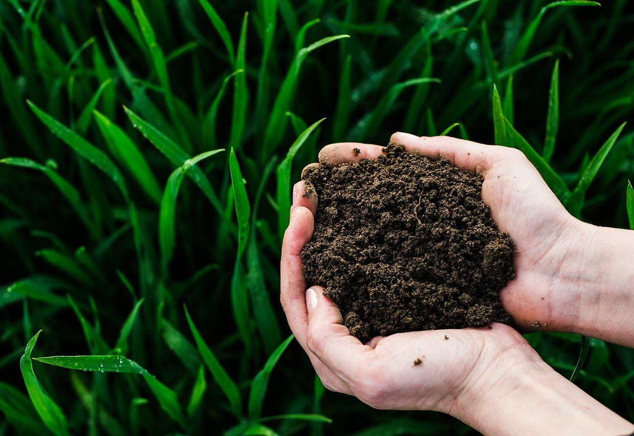 Hand Soil Grass