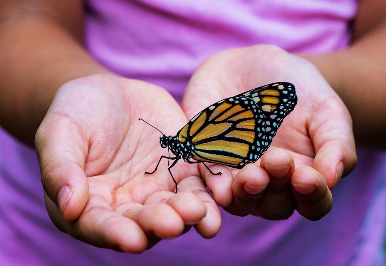 Hands Butterfly