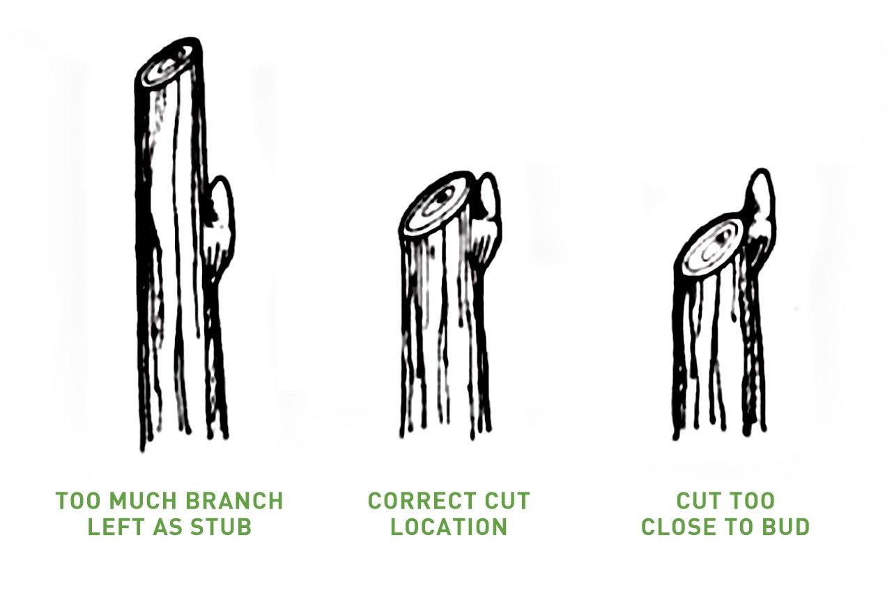 Intelligent Pruning_HeadingBack_Illustration
