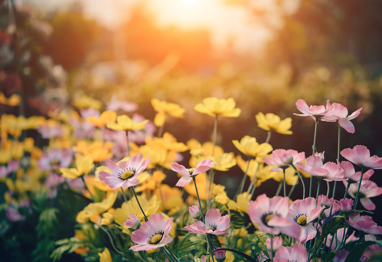 Organic Landscape Flowers
