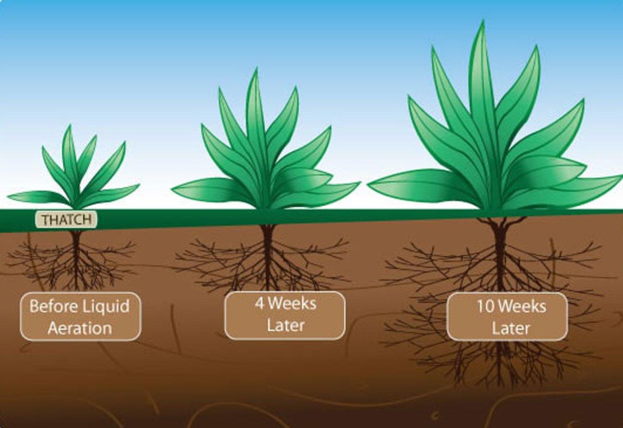 Liquid Aeration Roots Illustration