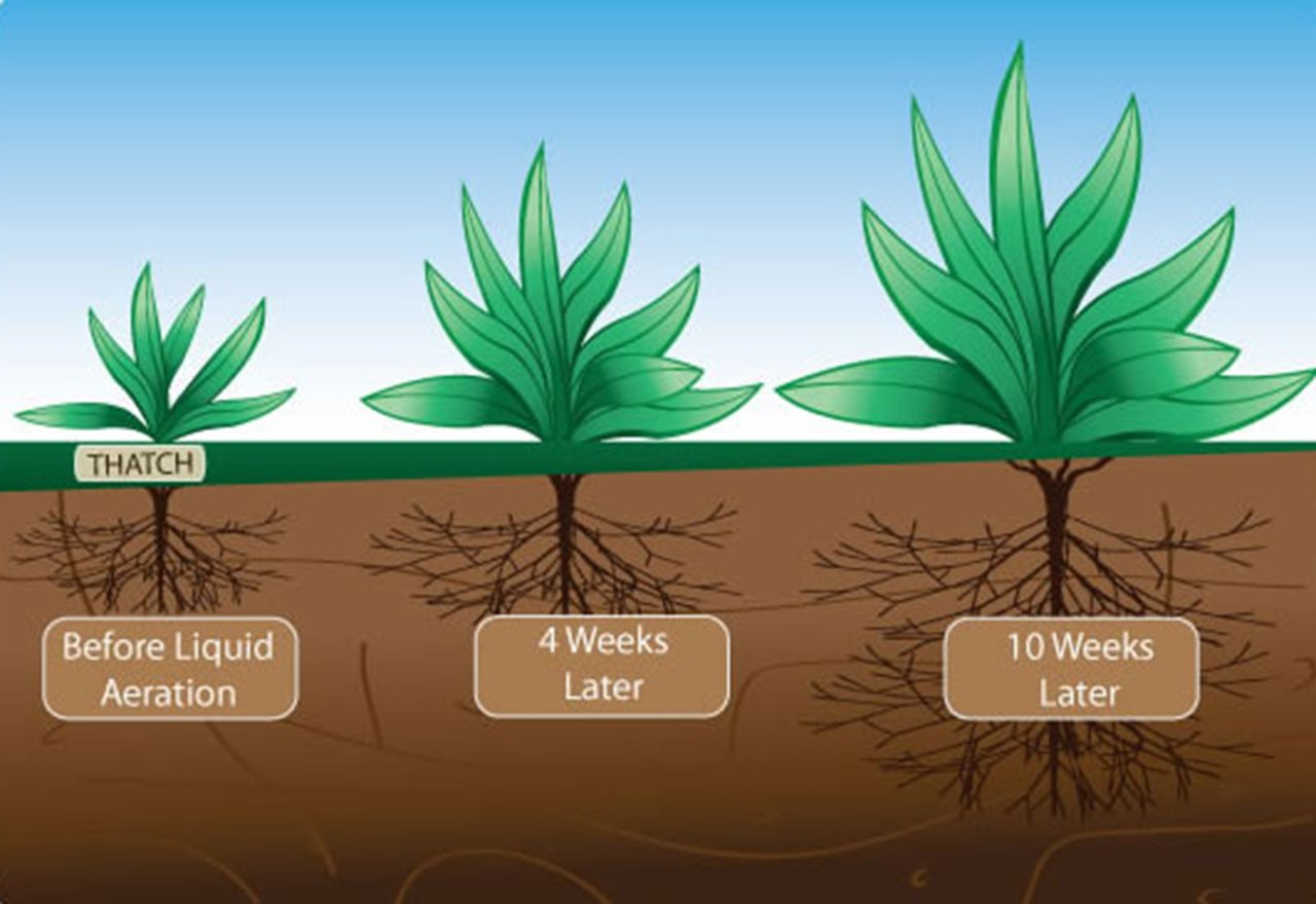 Liquid Aeration Roots Illustration