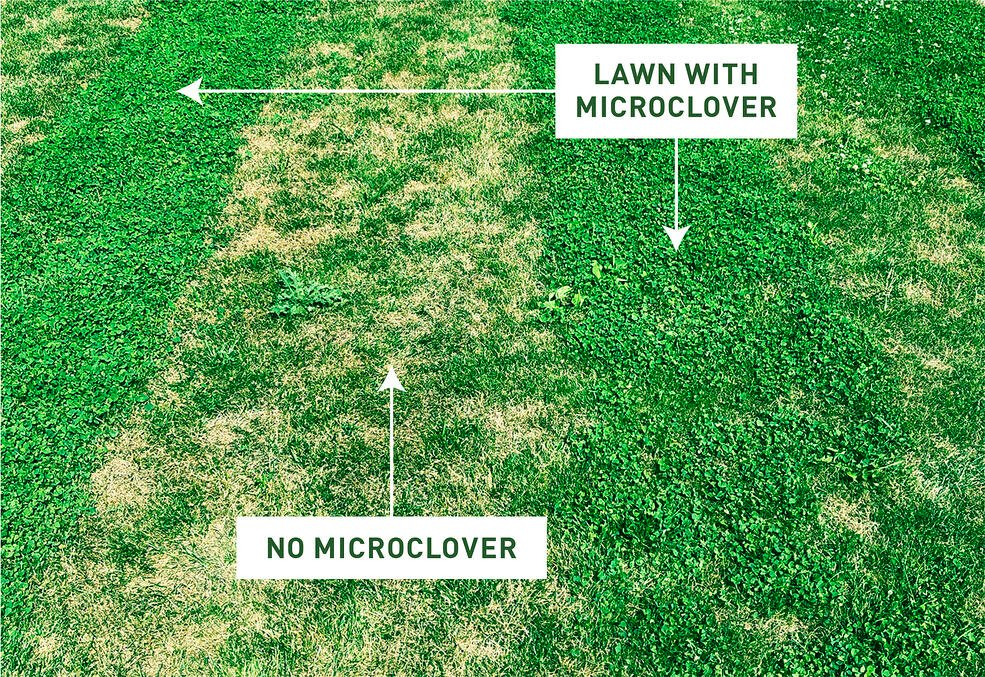 Microclover Lawn Comparison Mowing Heat
