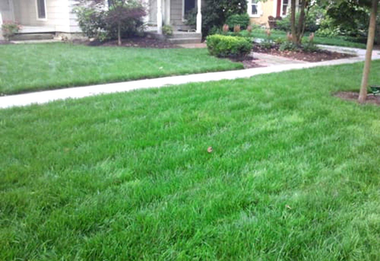 Neighbor Lawn Comparison Green Grass