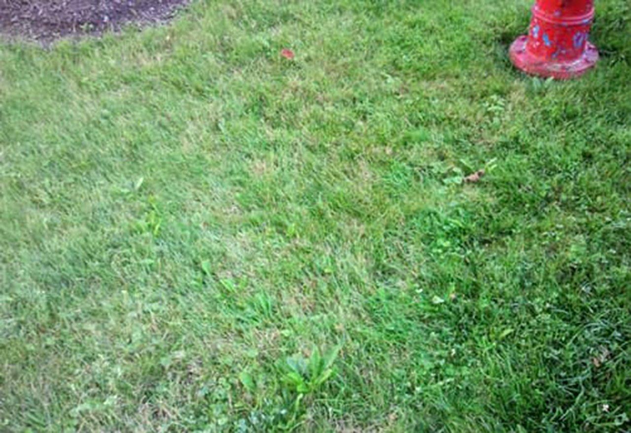 Neighbor Lawn Comparison