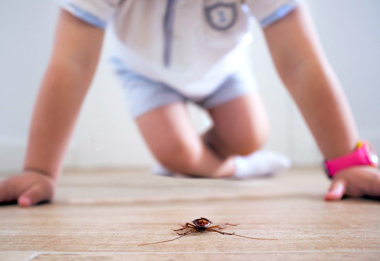 Pest Dead Home