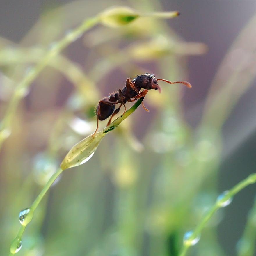 Pest Lawn Bug Square