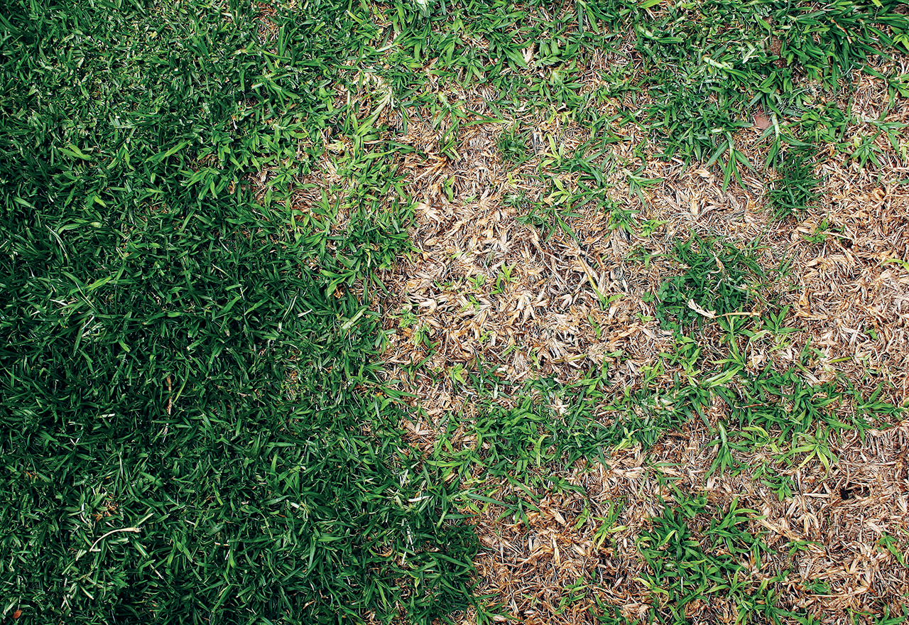 Problem Grass Brown Patch Disease