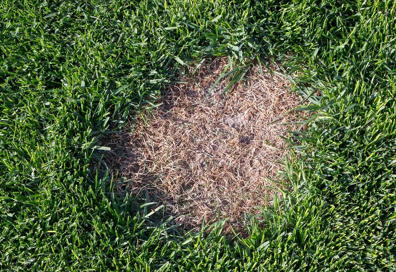 Problem Grass Brown Patch
