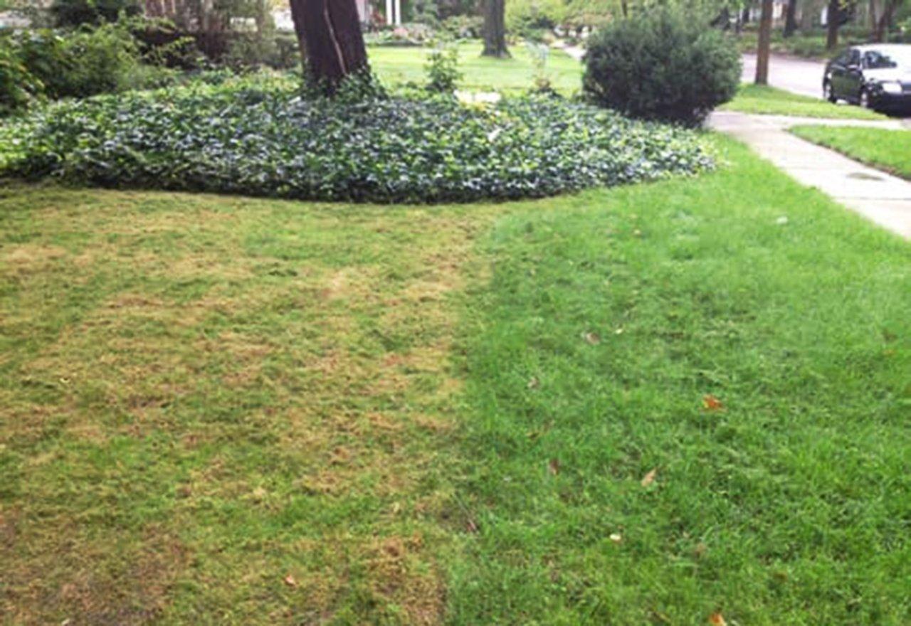 Problem Grass Cut Too Short Lawn