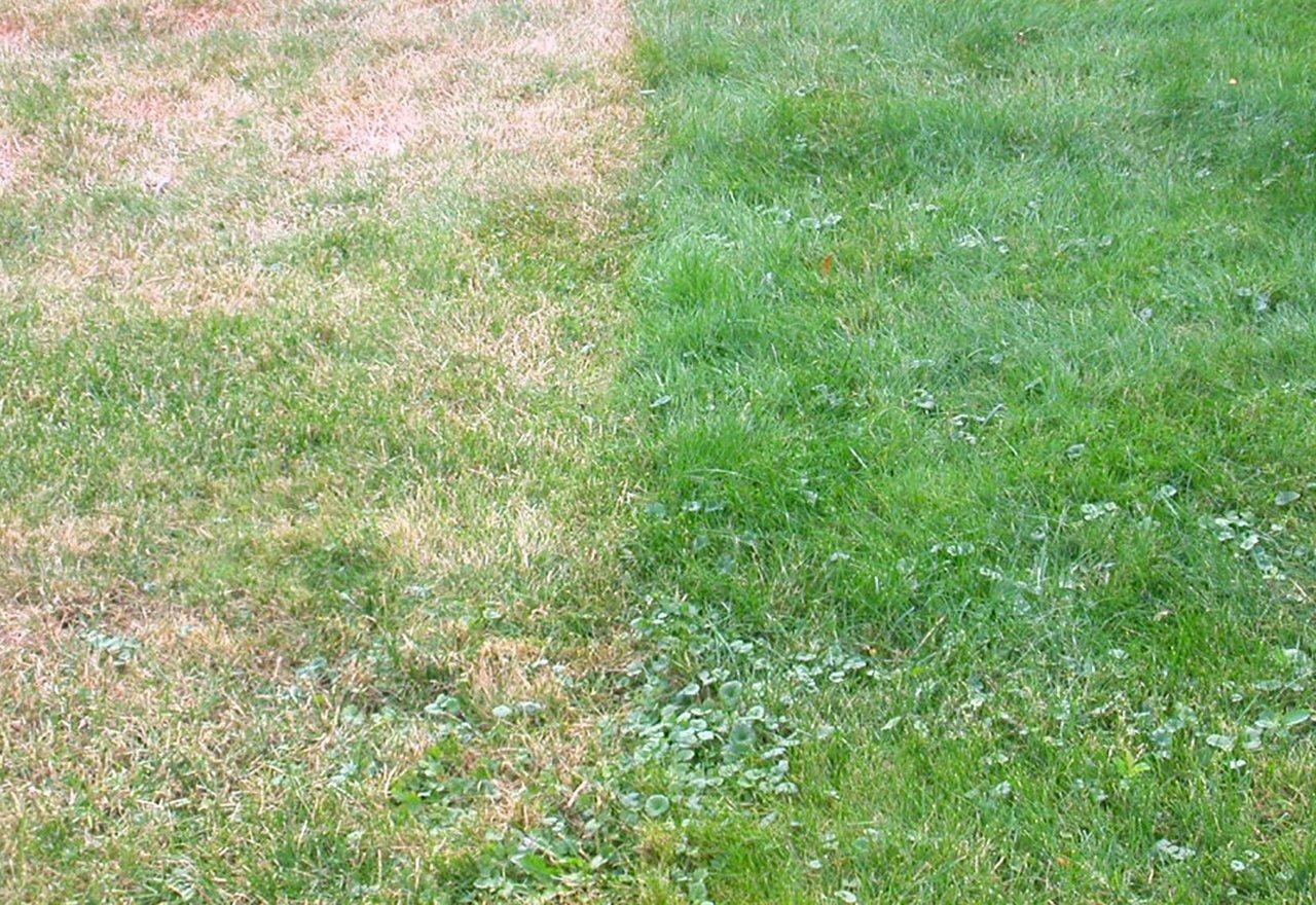 Problem Grass Cut Too Short