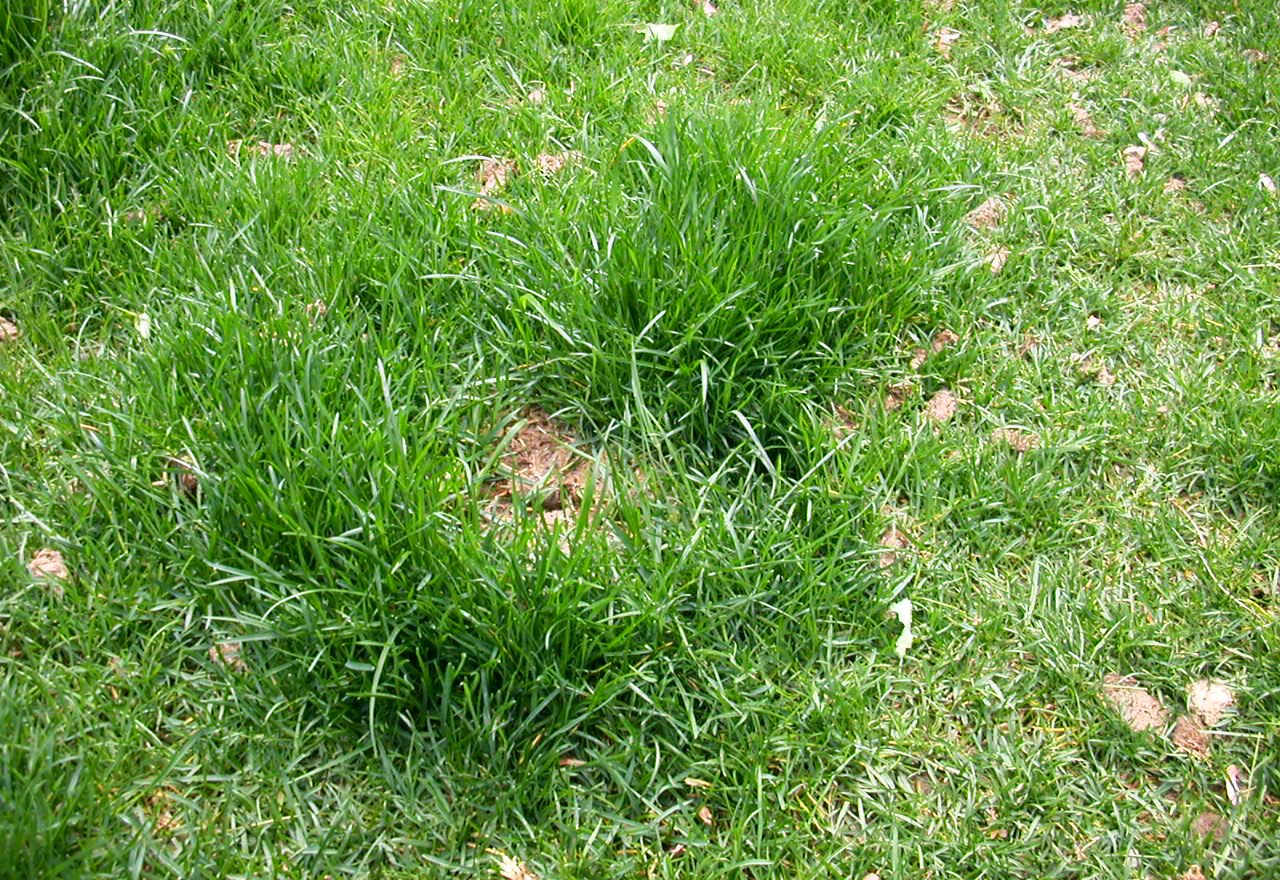 Problem Grass Dog Damage