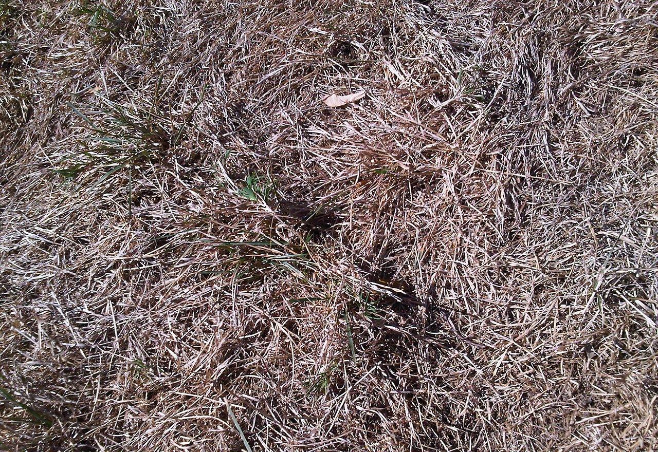 Problem Grass Dormant Grasses