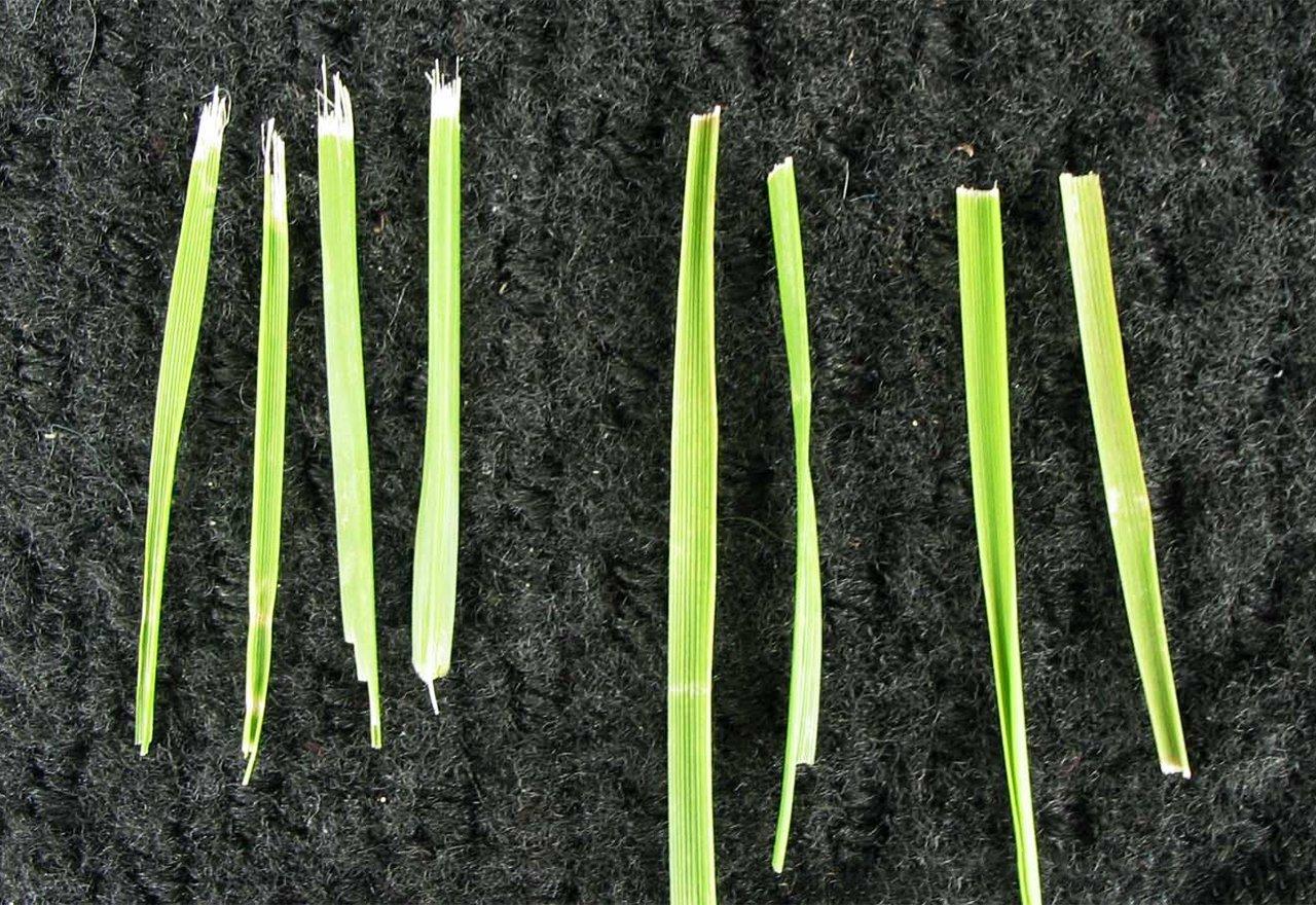 Problem Grass Dull Mower Blades Comparison