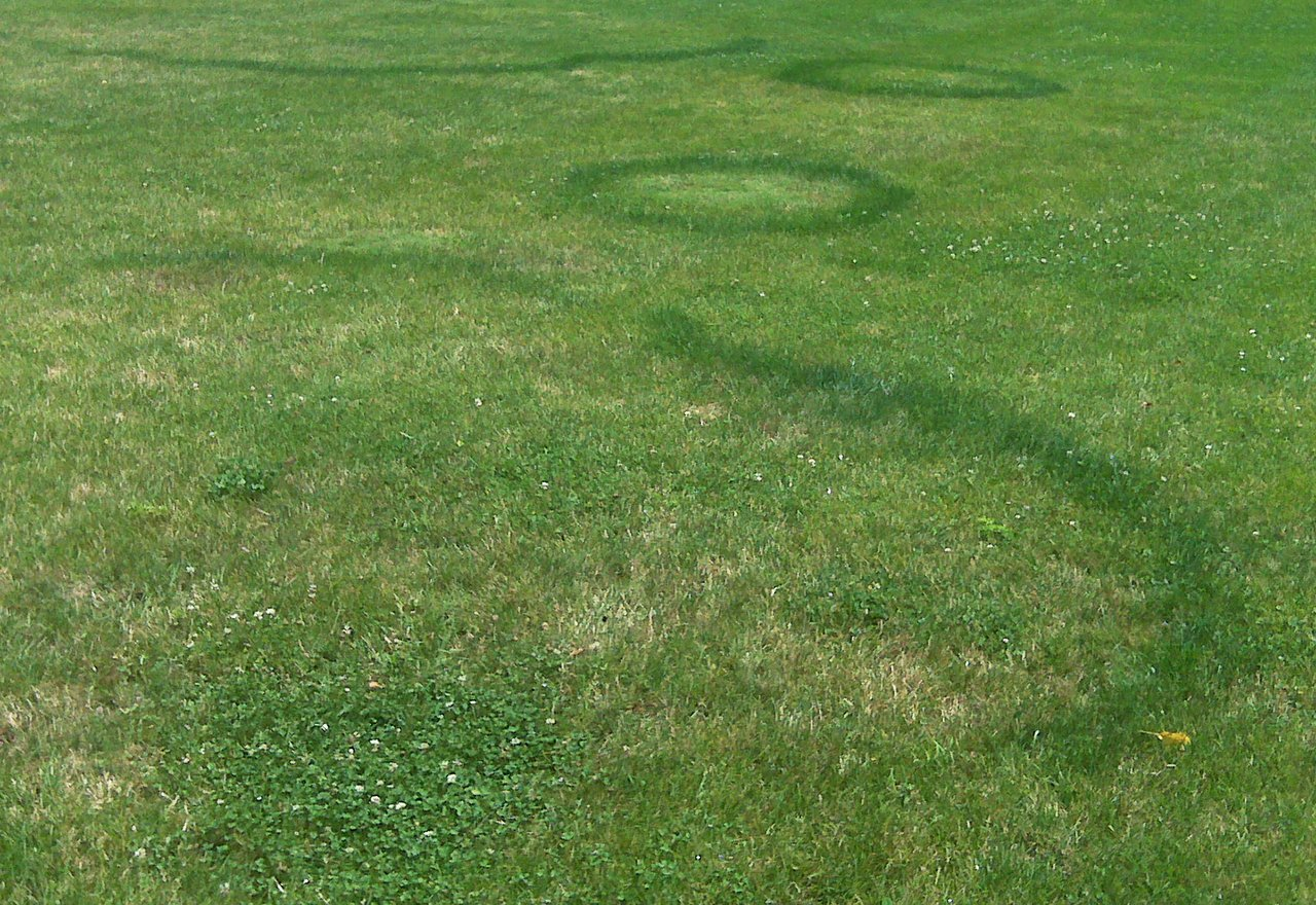 Problem Grass Fairy Ring