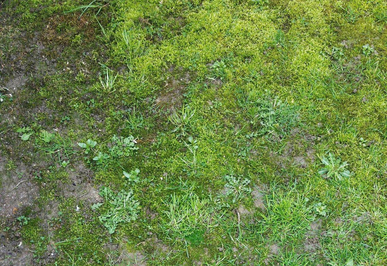 Problem Grass Moss