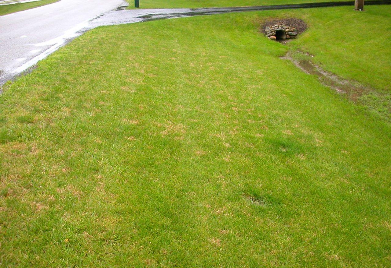 Problem Grass Pink Patch