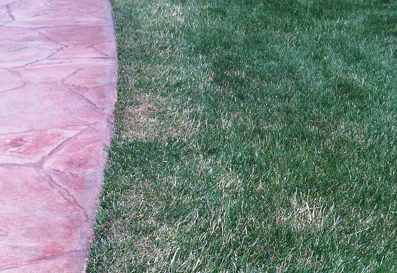 Problem Grass String Trimmer Damage