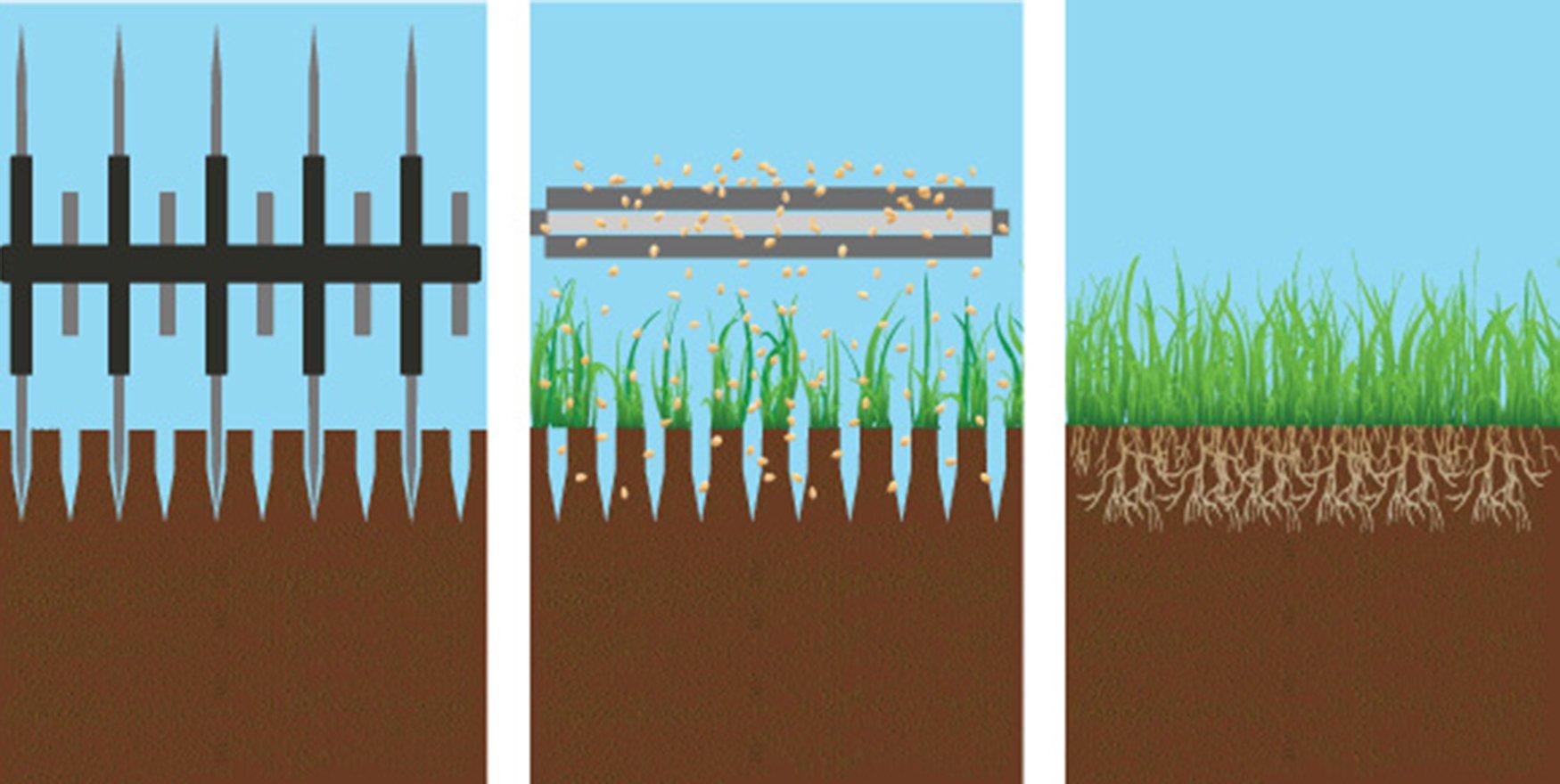 Slit Slice Seeding Illustration