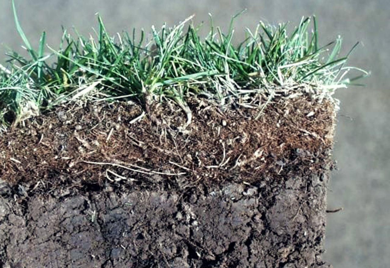 Soil Thatch