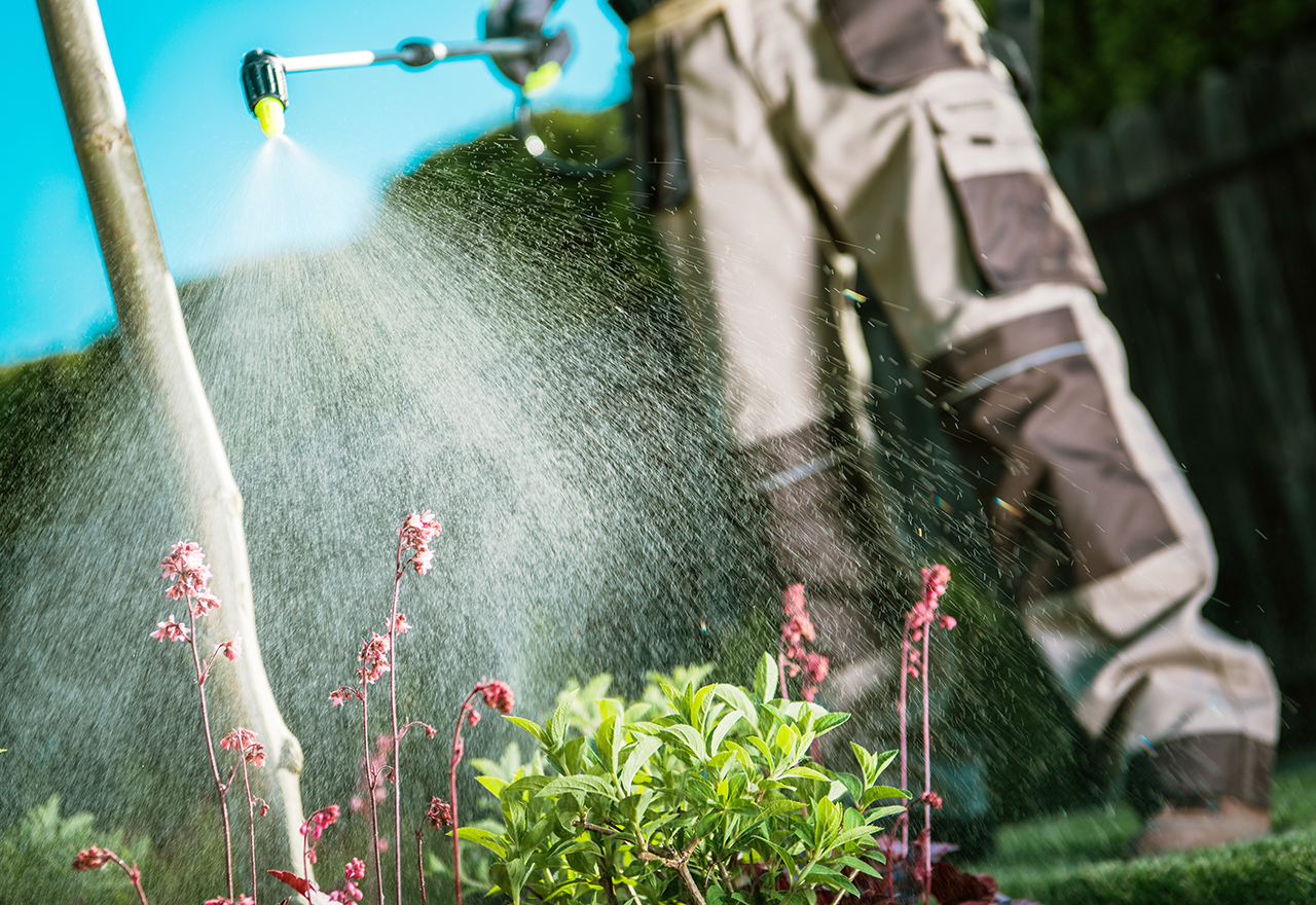 Spraying Lawn Chemical