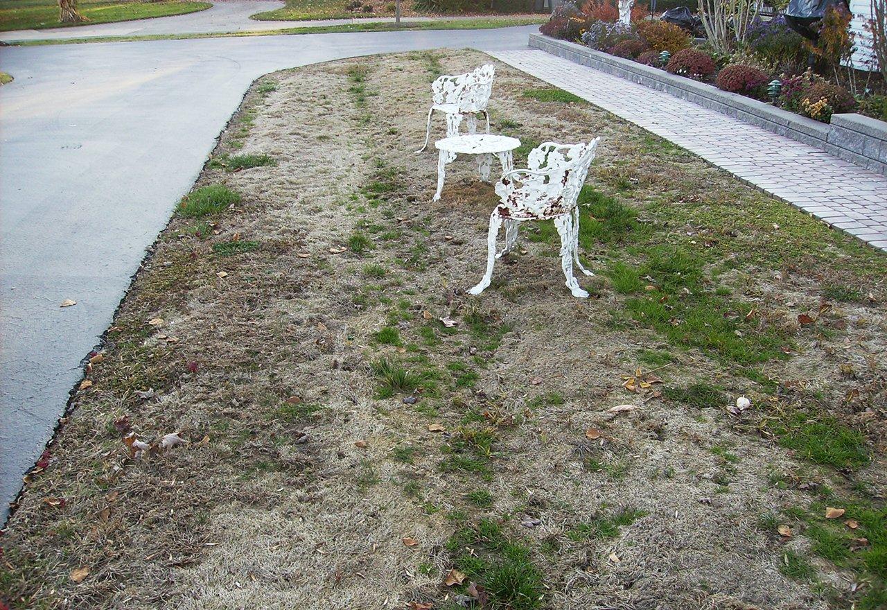 Tree Lawn Problems