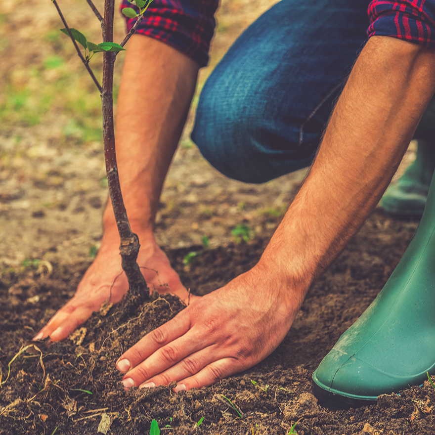 Tree Planting Square