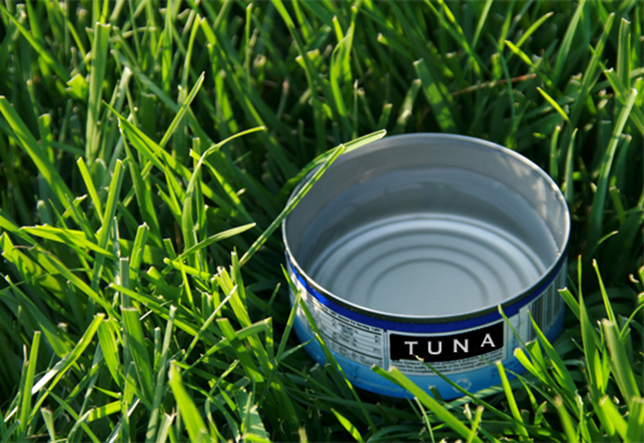 Water Tuna Can Sprinkler