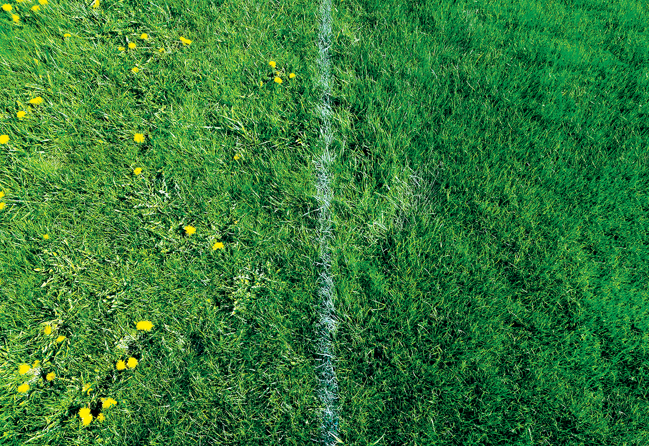 Fight Lawn Weeds Naturally