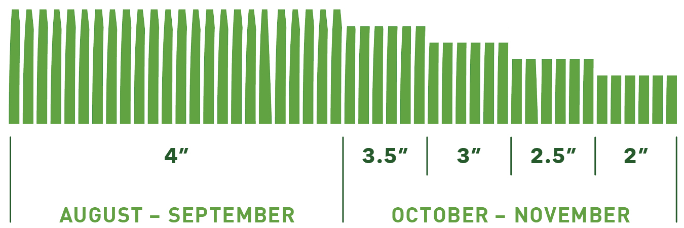 Winter Grass Mowing Height Graphic