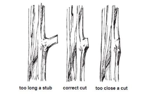 Thinning Pruning