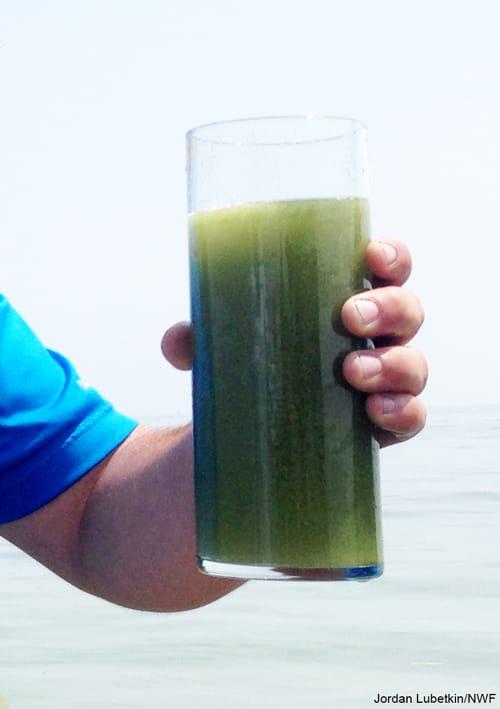 Toledo Toxic Algae in a glass