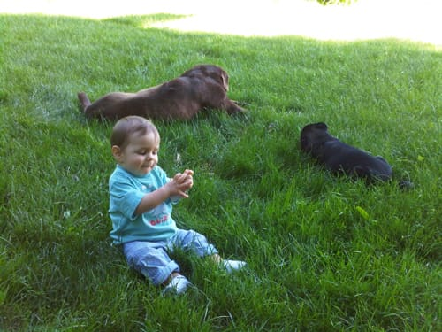 boy with dogs on lawn