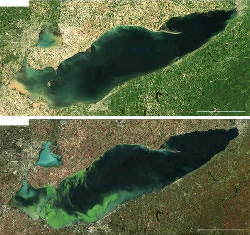 Lake Erie Algae summer vs fall