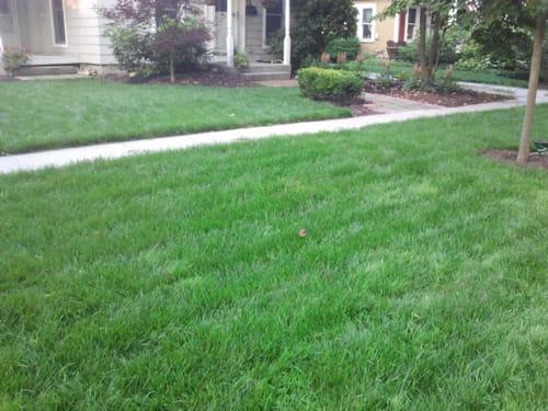 organic healthy lawn