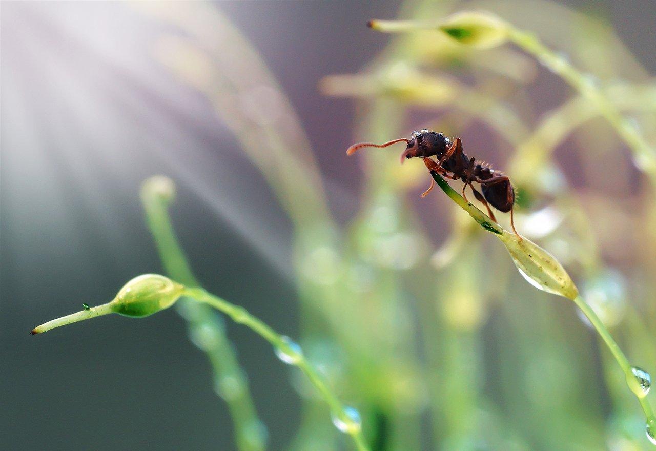 Pest Lawn Bug